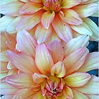 A Pair Of Dahlias  by kkphoto1