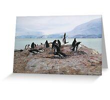 Gentoo Penguin Rookery on Trinity Island, Antarctica Greeting Card