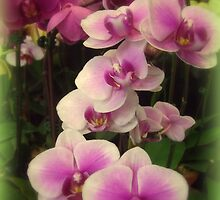 Purple Orchids for My Love by Miriam Danar
