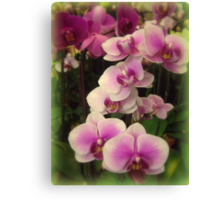 Purple Orchids for My Love Canvas Print