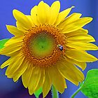 A Striking Sunflower by jozi1