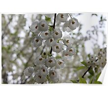 White Hanging Flowers Poster