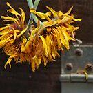 Last Days Gerbera by Lozzar Flowers & Art