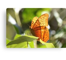 Orange Butterfly Canvas Print