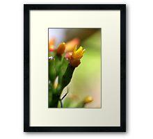 Cactus Pencil Framed Print