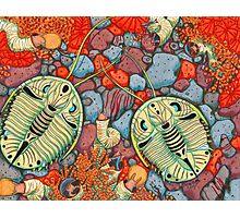 Genevievella trilobite Photographic Print