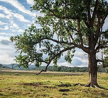 Lone Tree in the Morning by Candice O'Neill