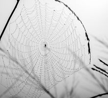Dewdrops & Spiders by Candice O'Neill