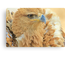 Tawny Eagle Anger - Wildlife Humor Canvas Print