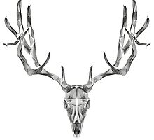 Deer Skull Animal Line Art by thorstenschmitt