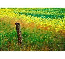 Rustic Boundary Photographic Print
