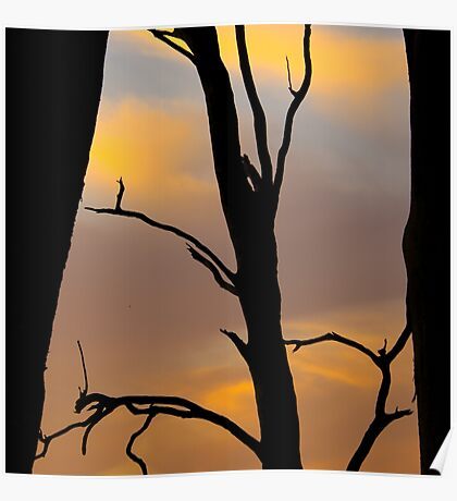 Sunset Silhouette  Poster