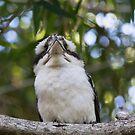 Not Happy Kooka by byronbackyard