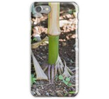 field planted with corn on the cob iPhone Case/Skin