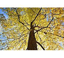 Golden Tree Photographic Print