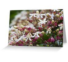 flower in spring Greeting Card
