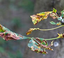 colorful leaves in the forest by spetenfia