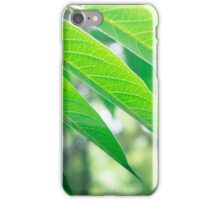 Branch ailanthus with narrow leaves iPhone Case/Skin