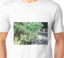 Conifer branch at the city street Unisex T-Shirt