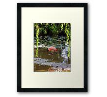 Hey Pretty Flamingo Framed Print