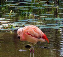Hey Pretty Flamingo Sticker