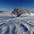 Endurance.  Mt Stirling  by Donovan wilson