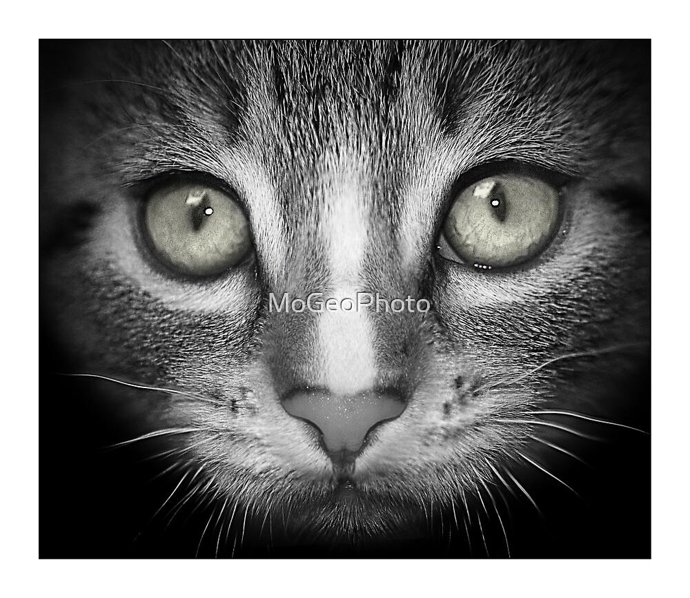 Look into my Eyes... by MoGeoPhoto