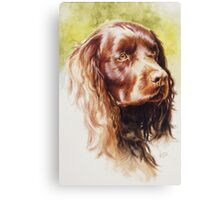 American Water Spaniel Canvas Print