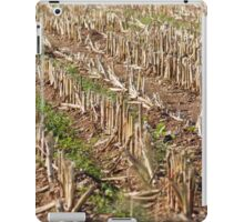 field planted with corn on the cob iPad Case/Skin
