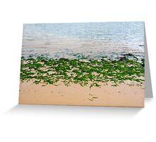 Youghal bright green seaweed Greeting Card