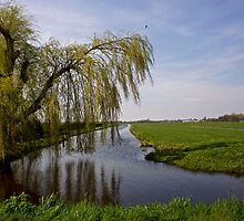 Weeping Willow by Hans Bax