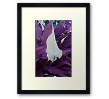 Catalano  Framed Print