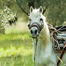 Horse on Lesvos by Sue Robinson