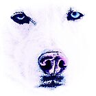 White Husky by AspenWillow