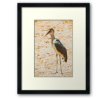 Marabou Stork Bird In Africa Framed Print