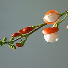 Peach and White by Kenneth Hoffman