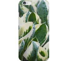 leaf in spring iPhone Case/Skin