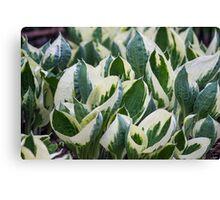 leaf in spring Canvas Print