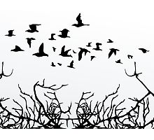 Birds over wood Photographic Print
