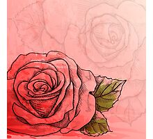 Sketch rose Photographic Print