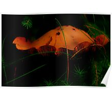 Fungus in the Black Forest.......... Poster