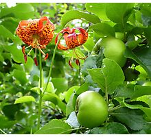Lilies And Apples Photographic Print