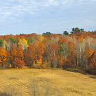 Autumn Trees and Pasture by John Butler