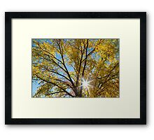 Cottonwood Sunshine Framed Print