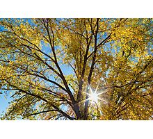 Cottonwood Sunshine Photographic Print