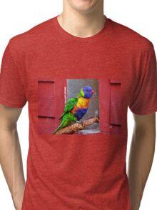 Rainbow Lory Tri-blend T-Shirt