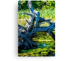 Beauty in the Shadows Canvas Print
