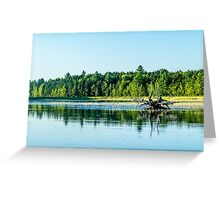 Driftwood Reflection Greeting Card