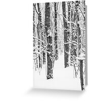 Snowy Forest 15 BW Greeting Card
