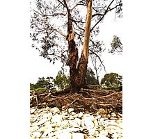 Still, Just Standing after Floods Photographic Print